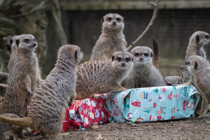 Give an animal-tactic Christmas gift to support Zoo during closure